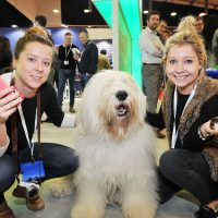 National Painting And Decorating Show Dulux Dog